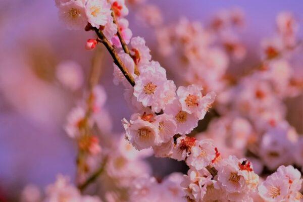 【3月3日はひな祭り】意外と知らないその由来は?どう過ごす?