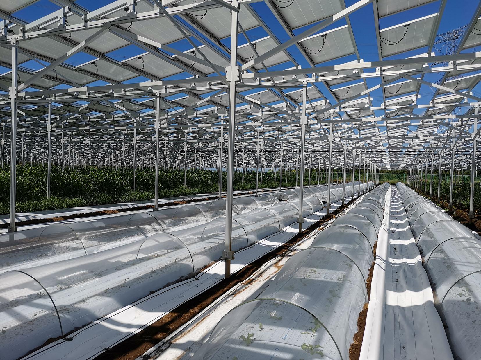 【第一実践者に聞く】ソーラーシェアリング課題と未来