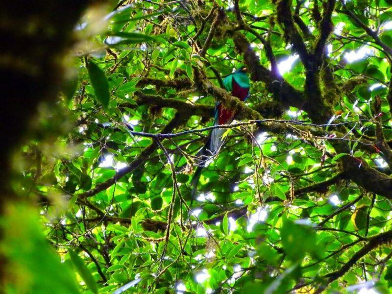 【コスタリカで学ぶ】エコツーリズムという旅行スタイルの楽しみ方