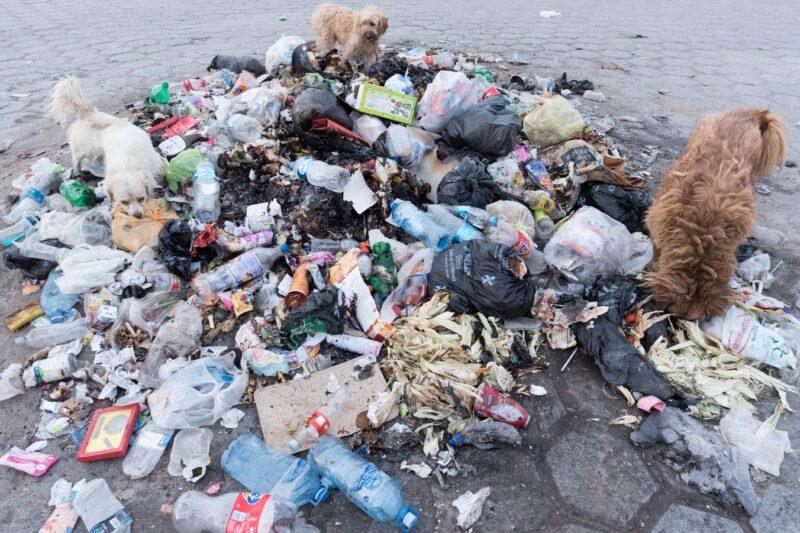 【海洋プラスチックごみ削減のために】手軽にできる分別とSDGs
