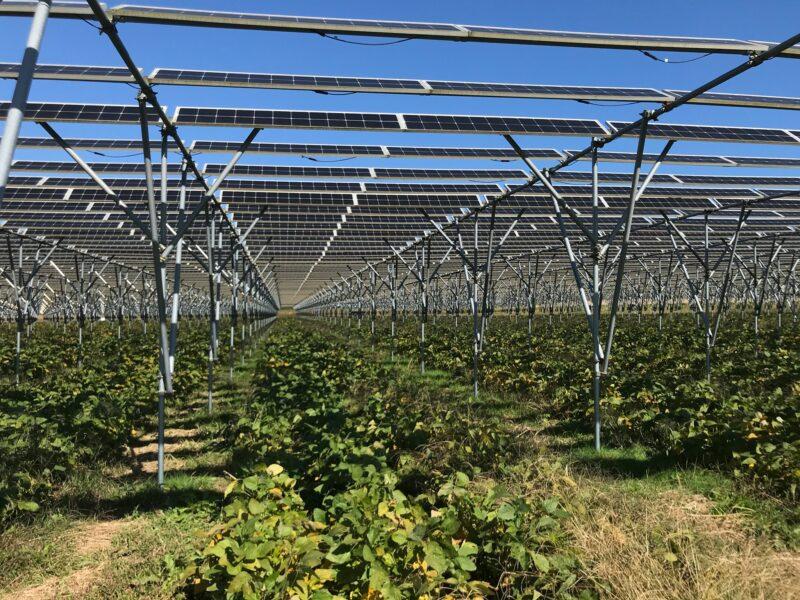 """【6年目を迎えるソーラーシェアリング】失敗を避けるコツと目指す""""持続可能な農業""""とは?"""