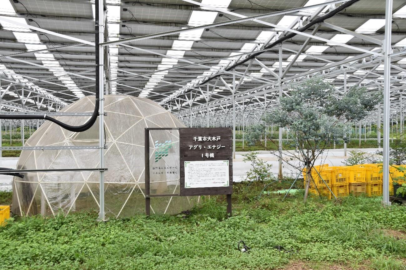 【農業×太陽光発電】ソーラーシェアリングの成功と失敗(前半)