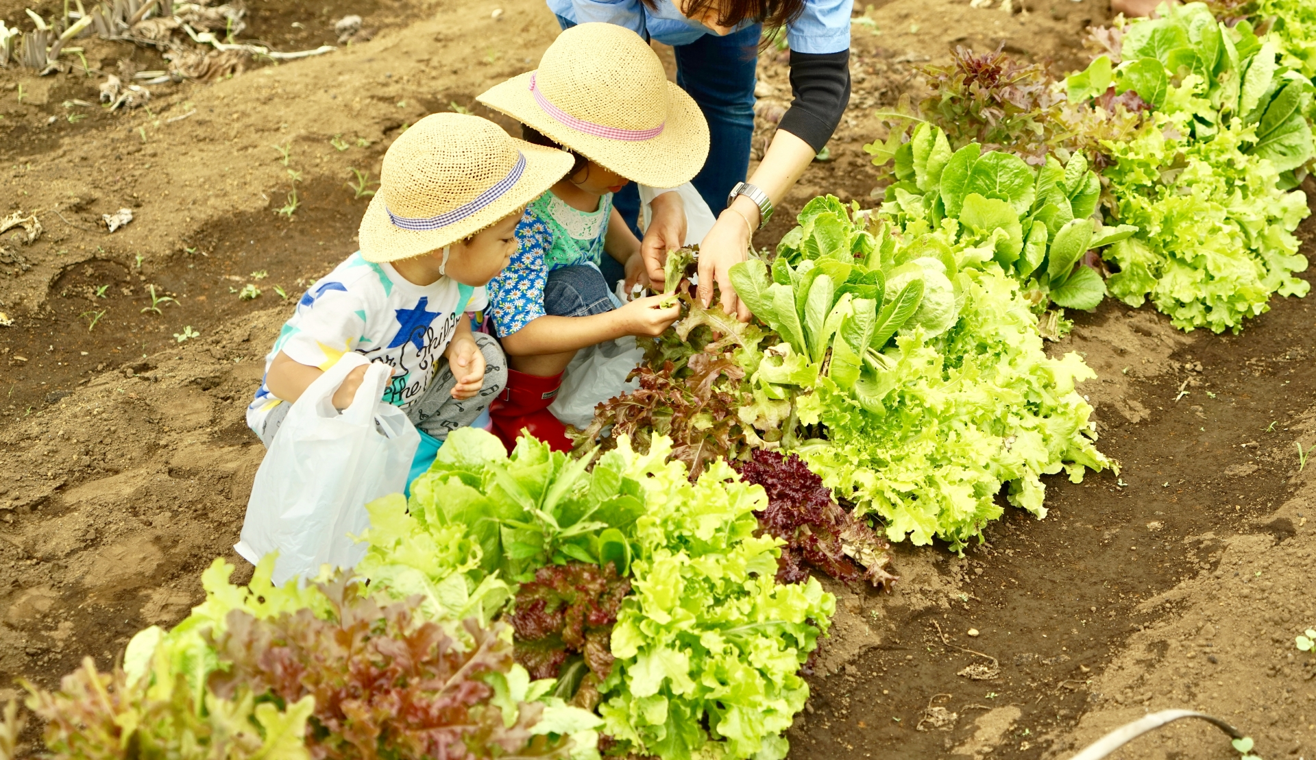 【貸し農園をレンタル!】シェア畑で自分産の野菜を育ててみよう